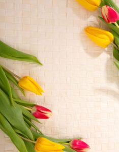 Caratula con diseño de Tulipanes para Cuadernos