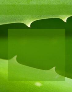 Caratula de color verde con diseño de sabila