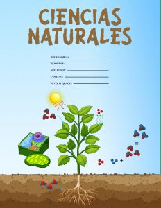 Caratulas de Ciencias Naturales sobre la fotosíntesis