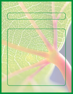 Diseños de Caratulas para Ciencia y Tecnología Naturales Plantas